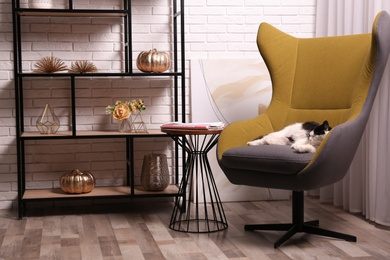 Cute cat in armchair near shelving at home. Interior design