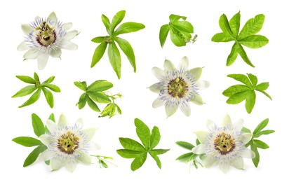 Set with Passiflora plant (passion fruit) flowers and leaves on white background