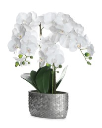 Beautiful orchid flower in pot isolated on white