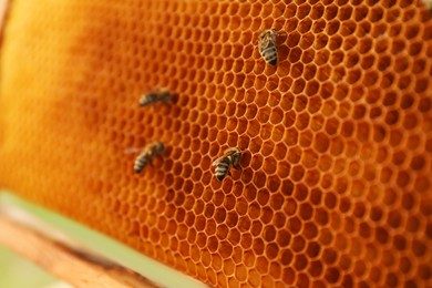 Closeup view of hive frame with honey bees
