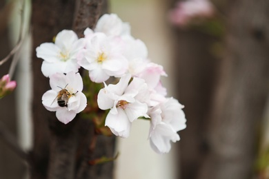 Closeup view of tree branch with tender flowers outdoors. Amazing spring blossom