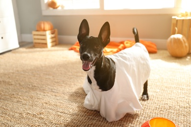 Cute black dog dressed as ghost at home. Halloween costume for pet