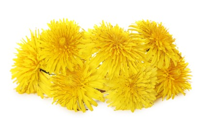 Beautiful blooming yellow dandelions on white background
