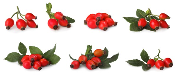 Set with ripe rose hip berries on white background. Banner design