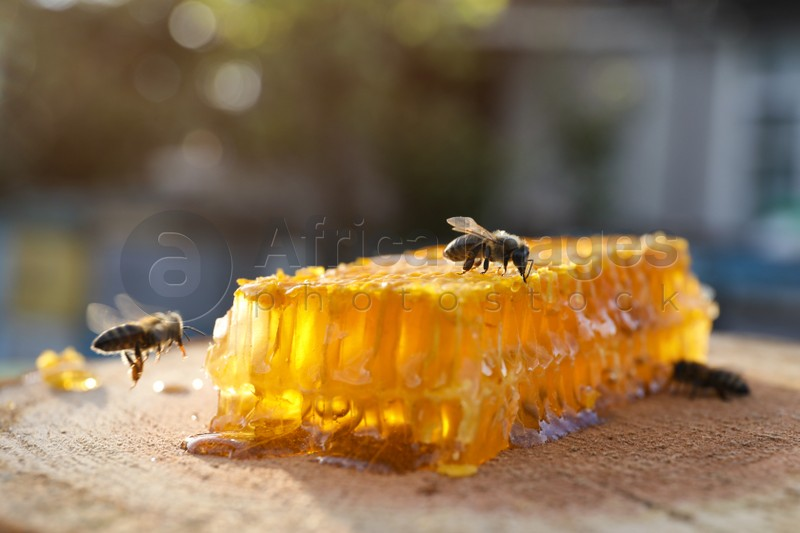 Piece of fresh honeycomb with bees on wood stump against blurred background, closeup