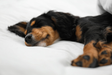 Cute dog relaxing on white fabric at home, closeup. Friendly pet