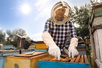 Beekeeper taking frame from hive at apiary. Harvesting honey