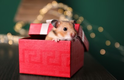 Cute little hamster looking out of gift box on wooden table, closeup
