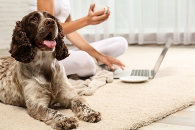 Adorable Russian Spaniel with owner on light carpet indoors, closeup view. Space for text