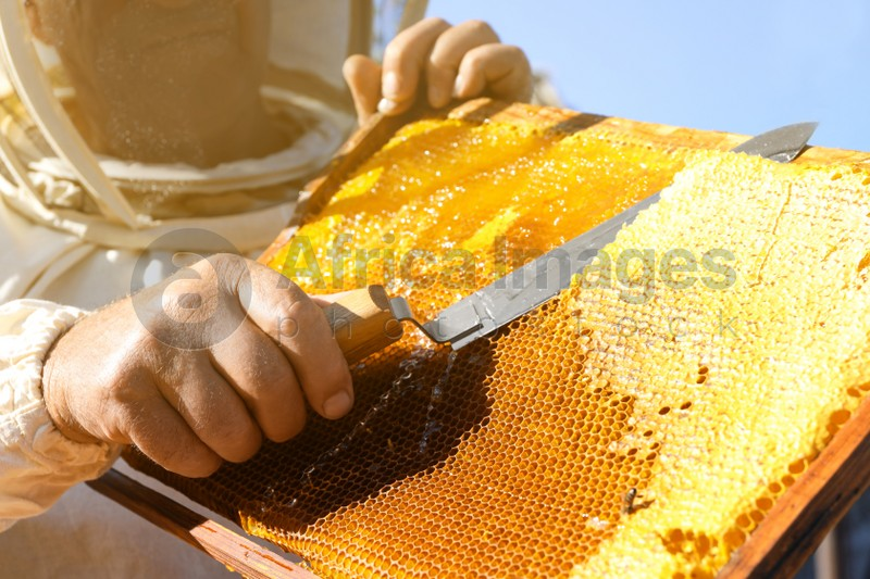 Senior beekeeper uncapping honeycomb frame with knife outdoors, closeup