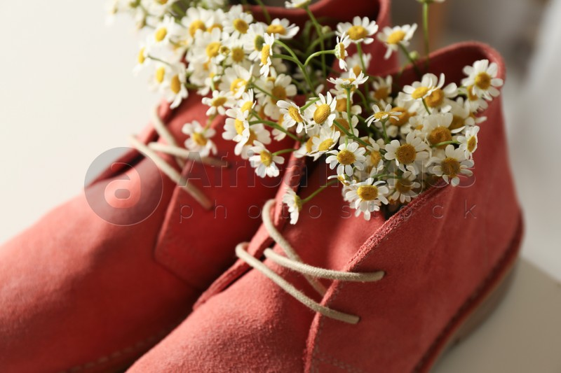 Beautiful tender chamomile flowers in pink boots, closeup