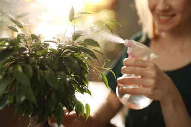 Young woman spraying ficus plant at home, closeup. Engaging hobby