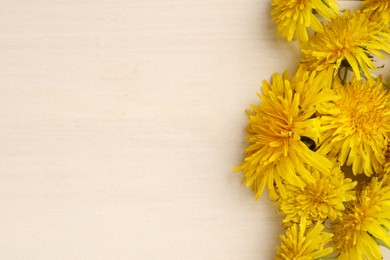Beautiful yellow dandelions on light table, closeup. Space for text
