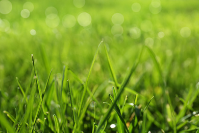 Lush green grass outdoors on sunny day, closeup
