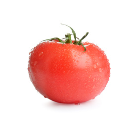 Fresh ripe organic tomato with water drops isolated on white