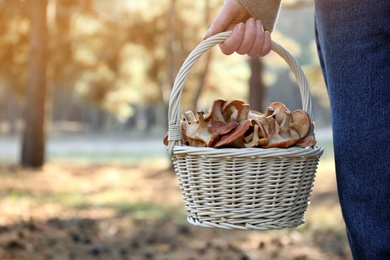 Woman holding wicker basket with fresh wild mushrooms in forest, closeup