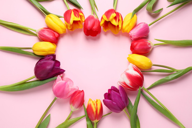 Frame made with beautiful spring tulips on pink background, top view. Space for text