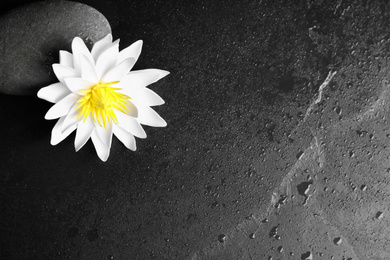 Stone, lotus flower and space for text on wet black background, flat lay. Zen lifestyle