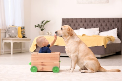 Little boy playing with adorable yellow labrador retriever at home