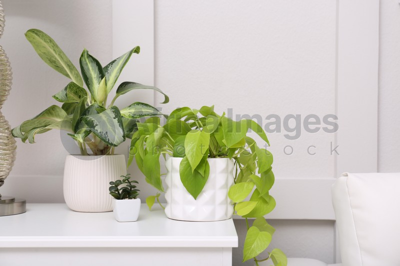 Different houseplants on white table near light wall. Interior accessories