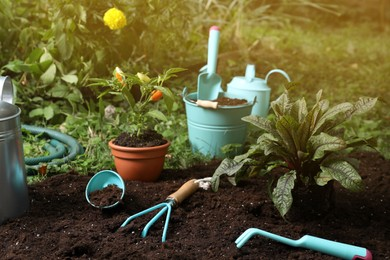 Beautiful plants and gardening tools on soil at backyard