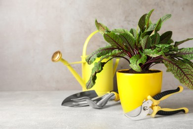 Potted sorrel plant and gardening tools on light grey table. Space for text