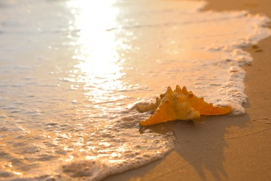 Beautiful sea star on sunlit sand at sunset, space for text