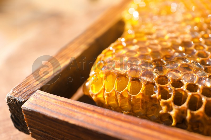 Uncapped honeycomb frame on blurred background, closeup