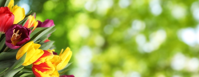 Beautiful bright spring tulips on blurred green background, space for text. Banner design