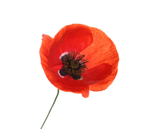 Beautiful red poppy flower isolated on white