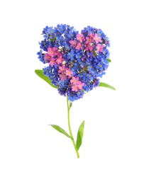 Heart made with beautiful Forget-me-not flowers isolated on white