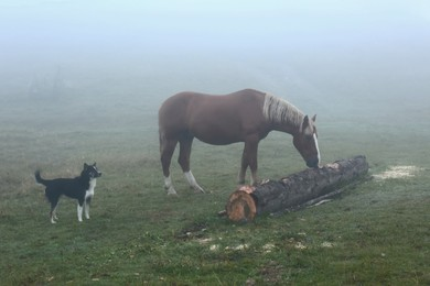 Horses and cute dog on misty meadow