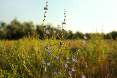 Beautiful field with wild flowers in morning, closeup