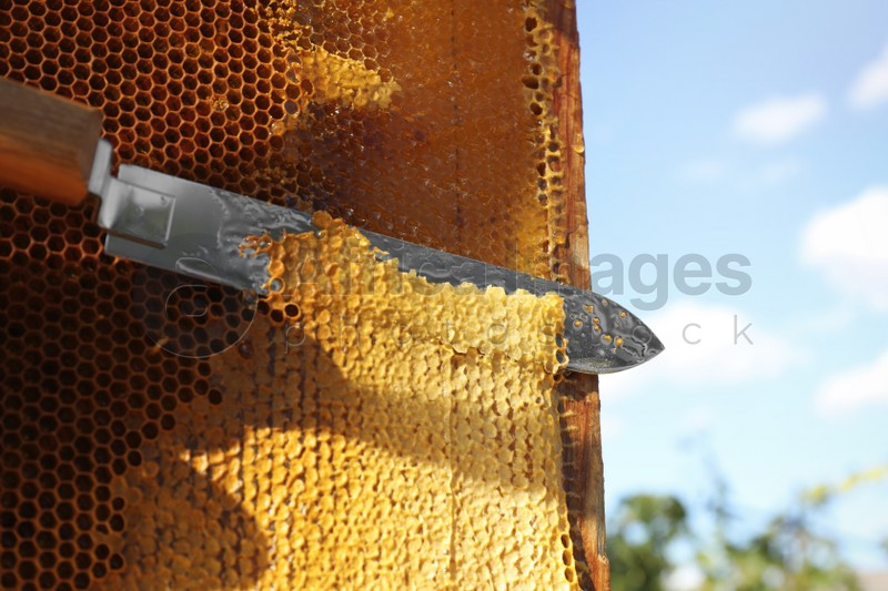 Uncapping honeycomb frame with knife outdoors on sunny day, closeup