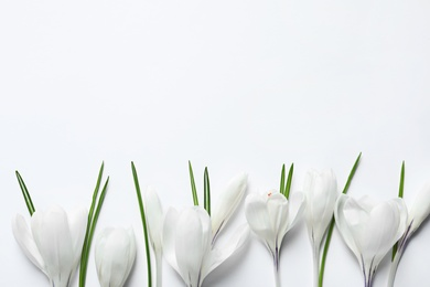 Flat lay composition with spring crocus flowers on light background, space for text