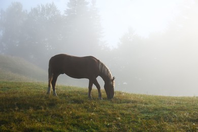Beautiful view of horse grazing on misty meadow