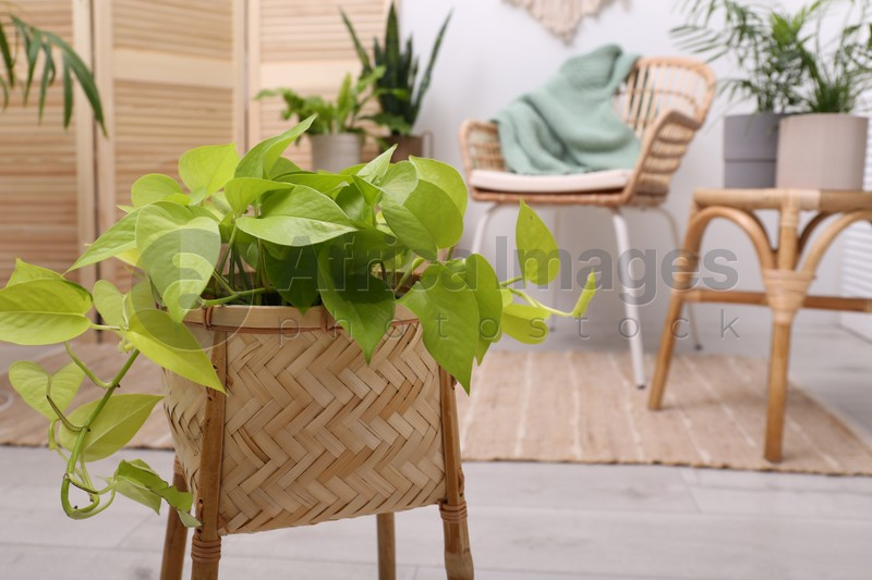 Beautiful potted plant, space for text. Interior design