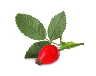 Ripe rose hip berry with leaves isolated on white