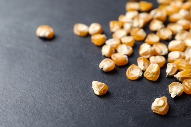 Raw dry corn seeds on grey background, closeup. Vegetable planting