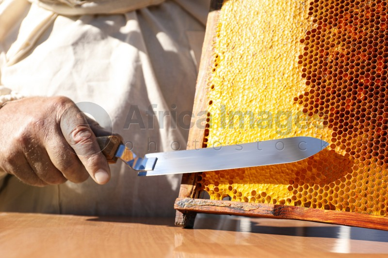 Beekeeper uncapping honeycomb frame with knife at table, closeup