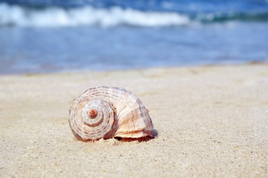 Shell on sand at sea shore. Summertime