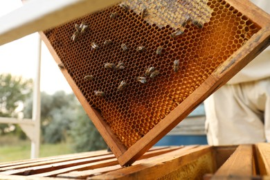 Wooden hive frame with honey bees outdoors