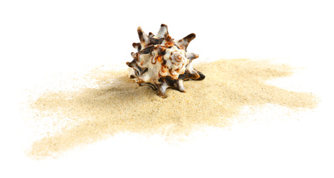 Beautiful sea shell and sand on white background