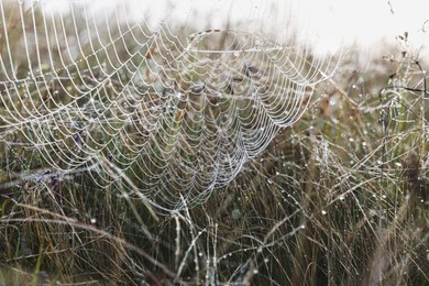 Closeup view of cobweb with dew drops on meadow