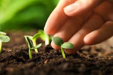 Woman examine young green seedling in soil outdoors, closeup