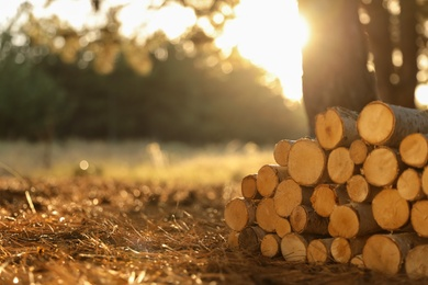 Stack of cut firewood in forest on sunny day