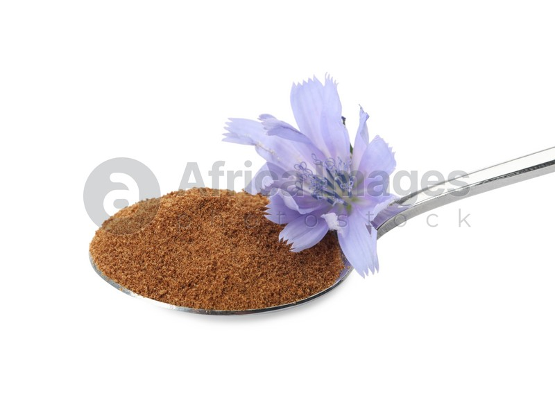 Spoon of chicory powder with flower isolated on white