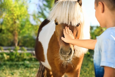 Little boy stroking cute pony outdoors on sunny day, closeup