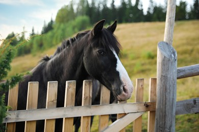 Beautiful horse near fence outdoors. Lovely domesticated pet