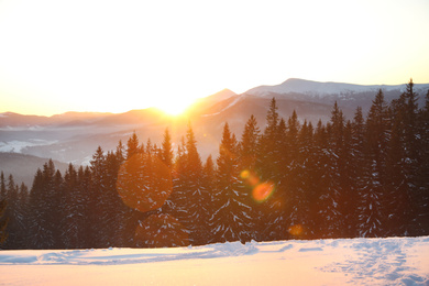 Picturesque view of conifer forest covered with snow at sunset